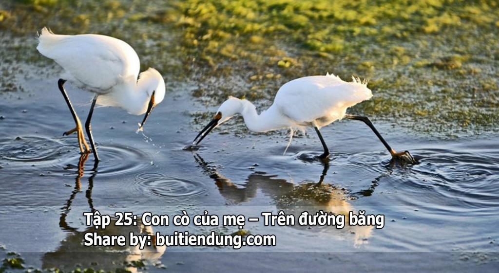 tap-25-co-co-be-be-tren-duong-bang