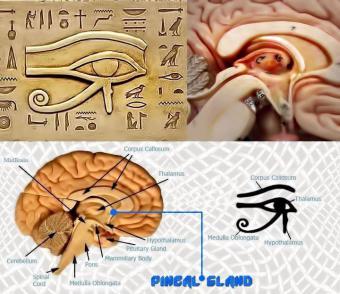 Con mắt thứ ba/ tuyến tùng/luân xa thứ 6/ thiên nhãn là gì?